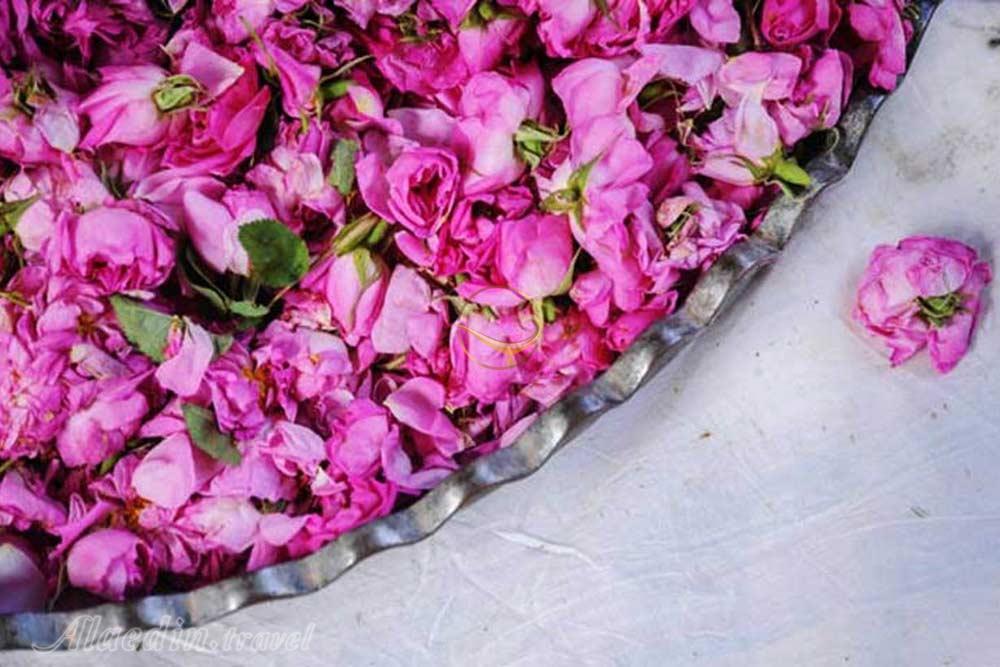 فروش عمده گلاب کاشان